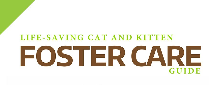 Cat & Kitten Foster Care