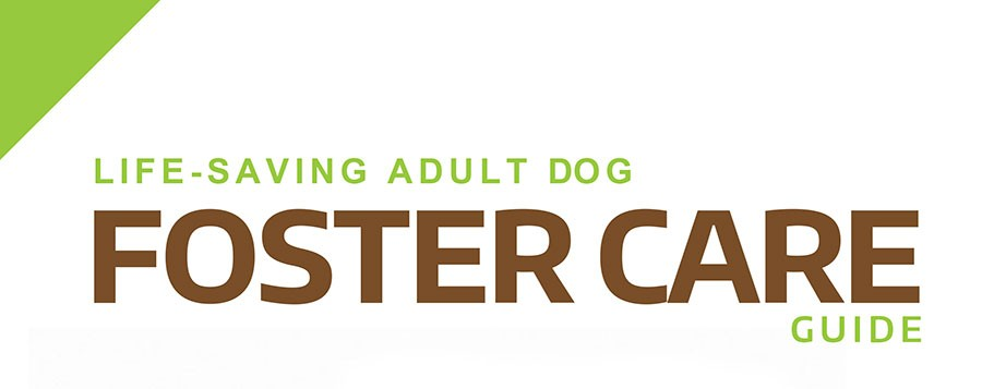 Dog Foster Care
