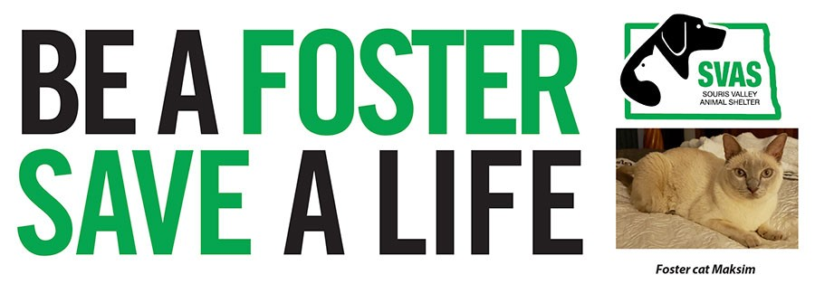 Be a foster - save a life!